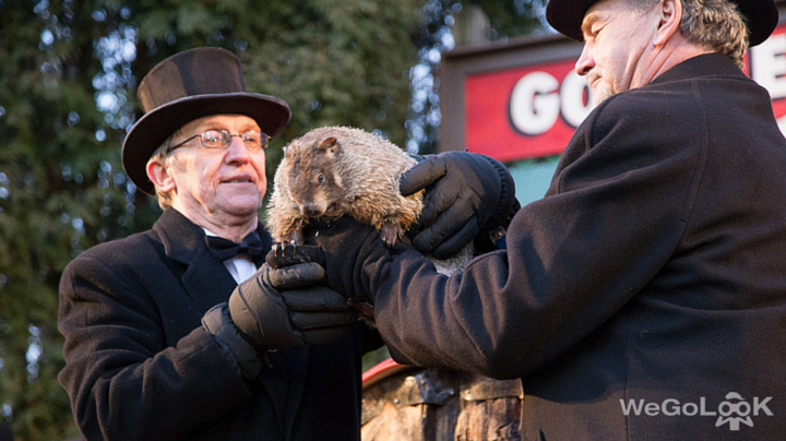 Groundhog Day 2016: Rejoice! Punxsutawney Phil Does Not See His Shadow